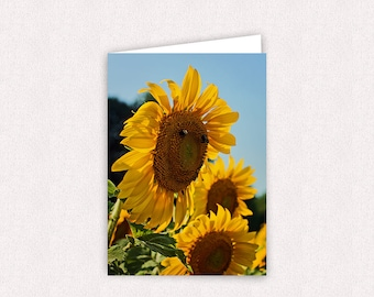 Smiling Sunflower Photo Note Cards 5x7 Glossy Flower Photo Greeting Card Blank inside with envelopes Sunflowers Stationary