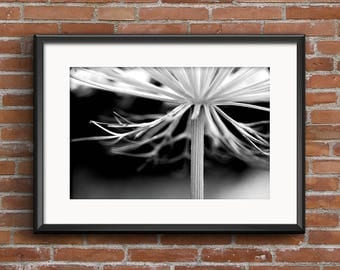 Queen Anne's Lace Black and White Fine Art Photograph 8x10, 11x14, 16x20 Nature Photography Flower Wall Art Wildflower Home Decor