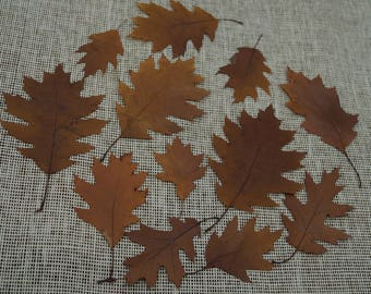 Pressed dried oak leaves Decorative material Decorations Selebration card  making Wedding decors Holidays art DIY set of 12 pieces