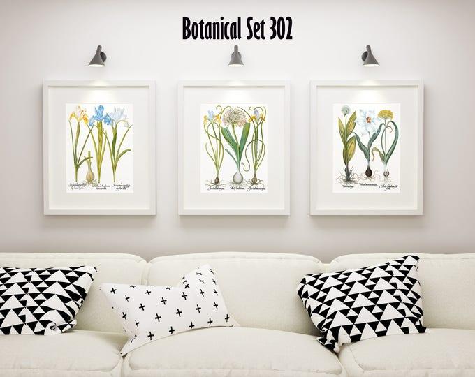 Botanical Print Set of 3, Vintage Botanical Illustrations, Floral Print Set, Botanical Posters, Botanical Artwork, Framed Botanical Art