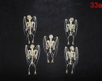 Taxidermy Real Bat Splaea Skeleton