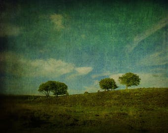 Countryside Tree Print, Tree Wall Art, Fine Art, Breen, Blue, Landscape Photography