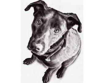 Custom Portrait Custom Drawing Portrait Custom Sketch Custom Pet Portrait Custom Hand Drawn Portrait Custom Dog Portrait Digital Portrait