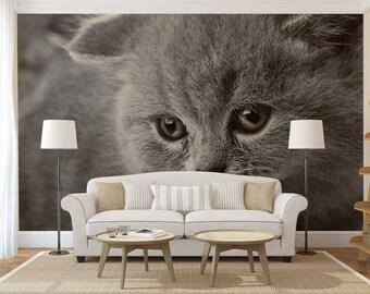 Wallpaper Animals, Wall Mural Kitten, Kitten Wall Decal, Wallpaper Kitten