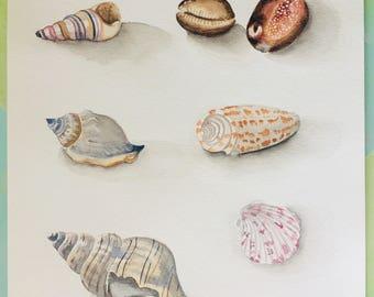 Watercolor Sea Shells collection wall art painting