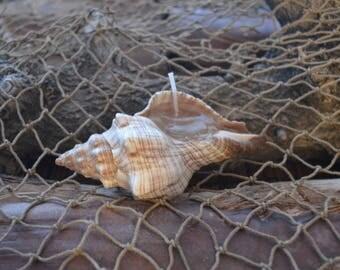 Seashell gel candle