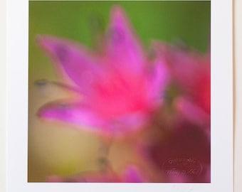 Fuchsia bloom fine art print