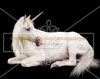 Unicorn - Overlay - White Horse - Transparent PNG - Resting Horse - White Unicorn - Fantasy - Photoshop Overlay - Prop - Instant Download.