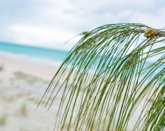 beach photography, beach, beach photo, waves, beach print, photo, fine art, sunrise, wall art, print, tree