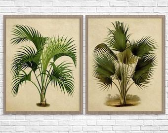 botanical print set of 2 palm tree botanical wall art print modern home decor
