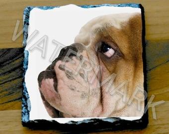 Bulldog Coaster Coasters . British Bulldogs