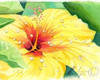 Yellow Hibiscus Watercolor