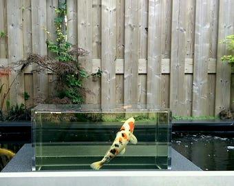 Transparant zwefend aquarium (seekoi-cube)