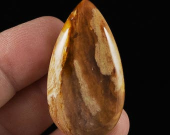 Interesting Petrified Wood Cabochon, 44x24x7mm, 57 cts (NF1189)