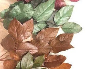 Dried Salal | Dried Lemon Leaf | Salal Leaves | Dried Decor | Natural Decorations