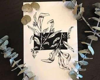 Eucalyptus Dumosa - Botanical Style Illustrstion - Black & White - Print