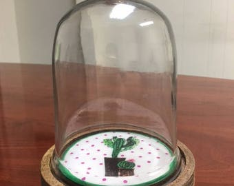 Glass dome with wood base. Cactus, Terrarium, Succulent Planter.