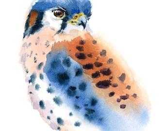 American Kestrel Bird Watercolour Painting Q61