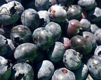 Stock Photo: Blueberries