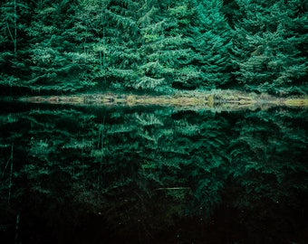 Gorgeous Green Tree Reflection - Instant Download