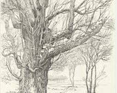 Tree Landscape | Original drawing | Nature art | Beautiful plants | FREE SHIPPIG