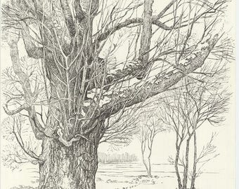 ORIGINAL DRAWING Tree Landscape. Pen drawing on paper. Realistic art. Contemporary art. Signed by artist