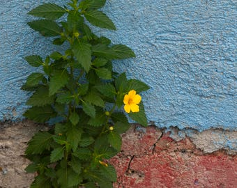 wall flower- original fine art photography print - travel photography - wall decor - nature and landscape photography