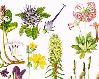 1970 Original Book Page Antique Print Wild Flower Garden Plants Botanical Leaves
