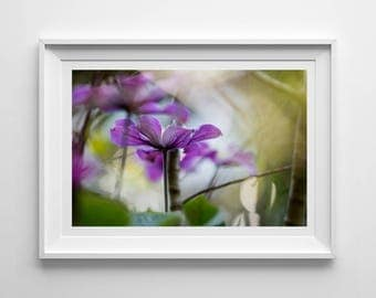 Purple Clematis, Original Photography Print, Flower, Landscape, Wall Art, Decor