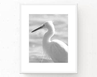 Bird Photo Download - Black White Download, White Photograph, Beach Decor, Download Photo, Printable Art, Bird Download, Black White Photo