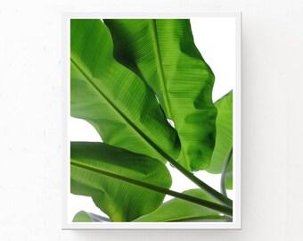 Tropical Print - Green Leaf Print, Tropical Wall Art, Digital Download, Green Leaf Print, Tropical Download, Green Leaf, Tropical Poster