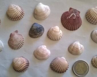 1 c) ocean shells, grass, clam shell