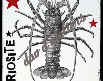 """""""curiosity lobster"""" digital image to make transfers for textile yourself."""