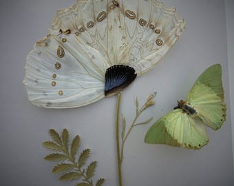 Butterfly Taxidermy