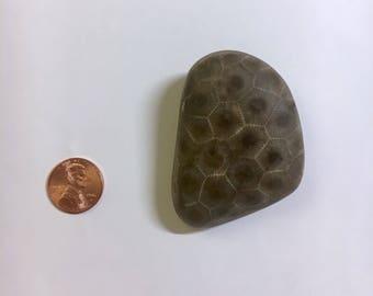 Finely Polished Petoskey Stone - Large