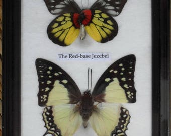 REAL 2 BEAUTIFUL Butterfly Collection In Frame BF02K