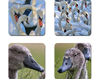 Set of 4 Swans drinks coasters featuring award winning photography by UniquePhotoArts.
