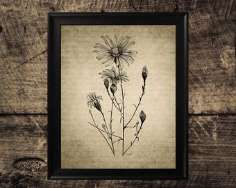 Vintage Aster print, flower decor, vintage botanical wall art
