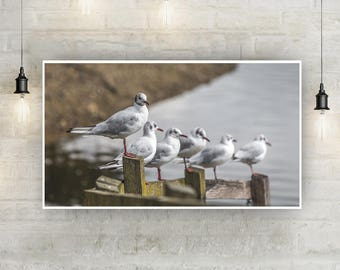 Sea Gulls Lined Up Instant Download Photo Print, Wildlife Photography, Bird Photography, Wall Art, Nature, Animals, High Quality, Digital