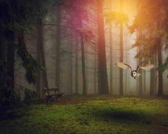 Fantasy Owl Scene