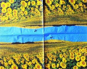 Field of sunflowers #F004 paper TOWEL