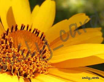 Card made by hand, greeting card, blank, card with photo, wish card, flowers, yellow