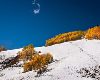 OPEN RANGE, Landscape Photography, Fine Art, Snow, Aspens, Fall Foliage, cloud, Blue Sky, Mountain, Colorado