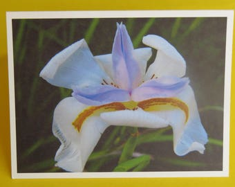 Flower Nature Photography Card