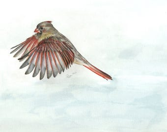 Eastern Bluebirds Art Print
