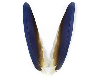 Macaw Tail 12403