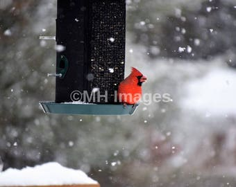 The Cardinal in the Snow Digital Download - JPG File