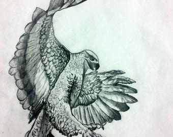 Hawk drawing, bird drawing, hand made, pencil drawing,fine precise drawing with shadows