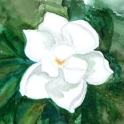 The Charming Magnolia