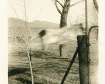 vintage photo 1914 Bruce Wonder Trick Dog Flies Across Fence Abstract Blur